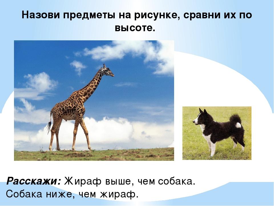 Назови предметы на рисунке, сравни их по высоте. Расскажи: Жираф выше, чем со...