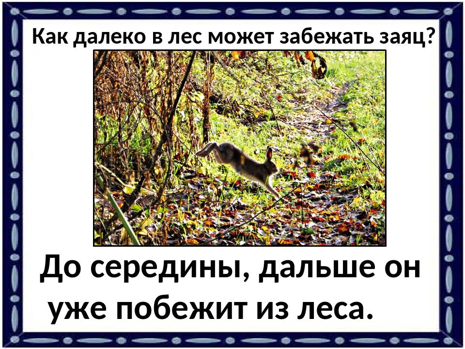 Как далеко в лес может забежать заяц? До середины, дальше он уже побежит из л...