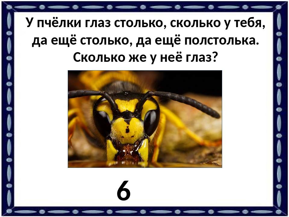 У пчёлки глаз столько, сколько у тебя, да ещё столько, да ещё полстолька. Ско...