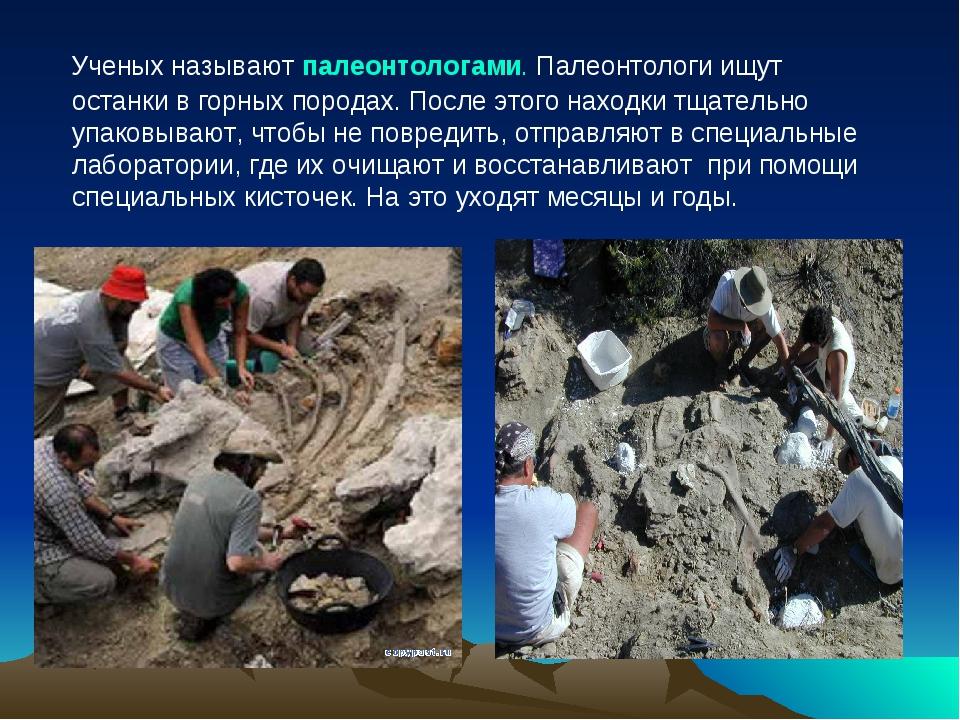 Ученых называют палеонтологами. Палеонтологи ищут останки в горных породах....