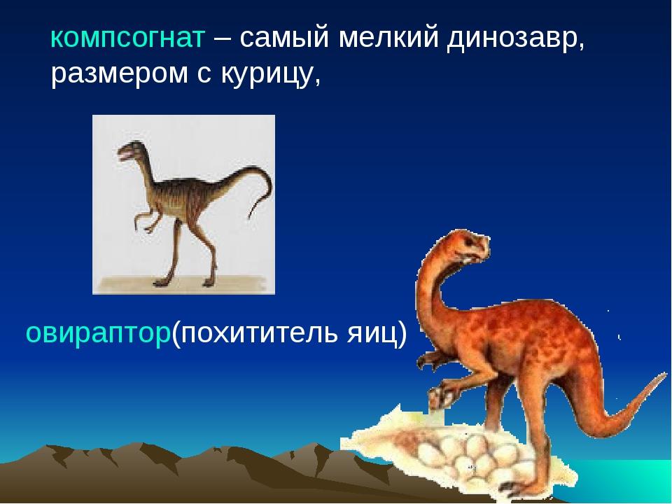 компсогнат – самый мелкий динозавр, размером с курицу, овираптор(похититель...