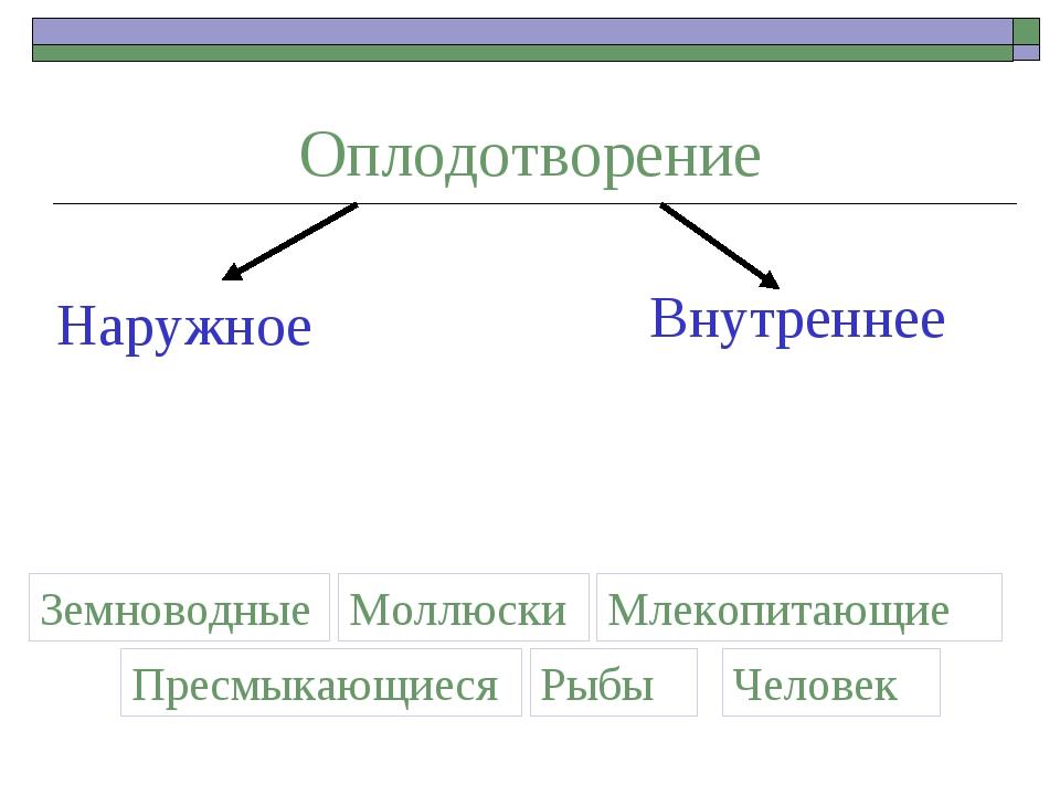 Оплодотворение Наружное Внутреннее Земноводные Моллюски Пресмыкающиеся Рыбы М...