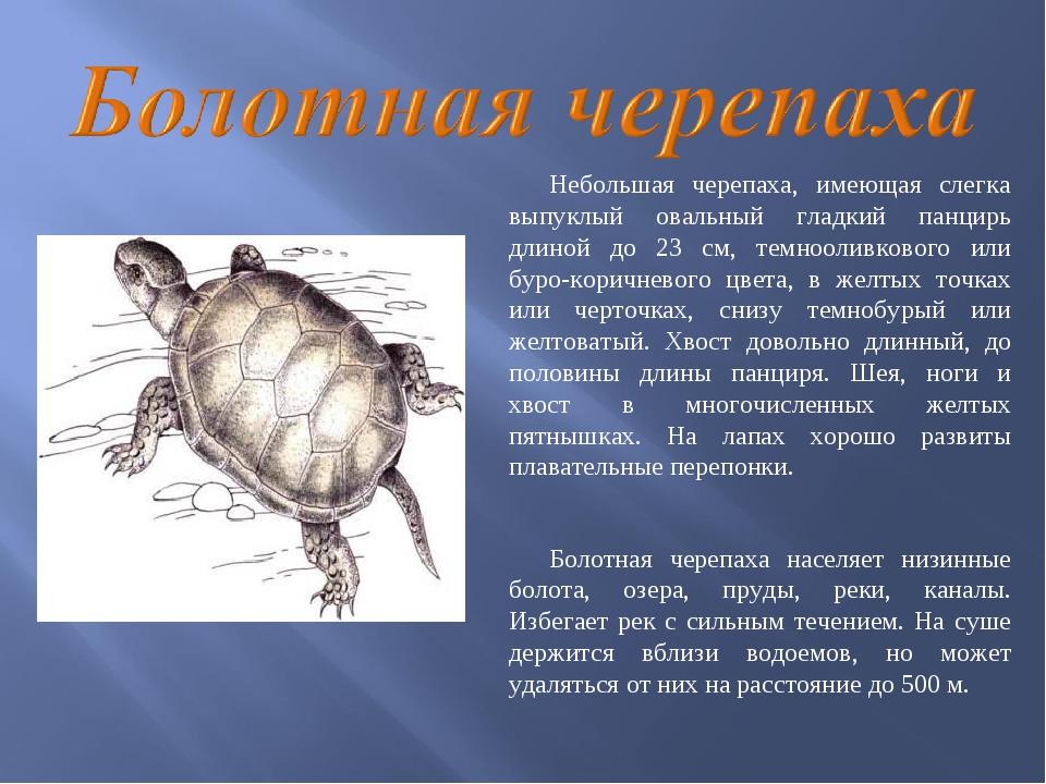 Картинки животных и растений красной книги нижегородской области