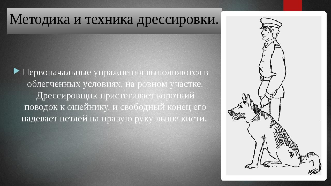 Затем левой рукой берет поводок на расстоянии 20–25 сантиметров от ошейника,...