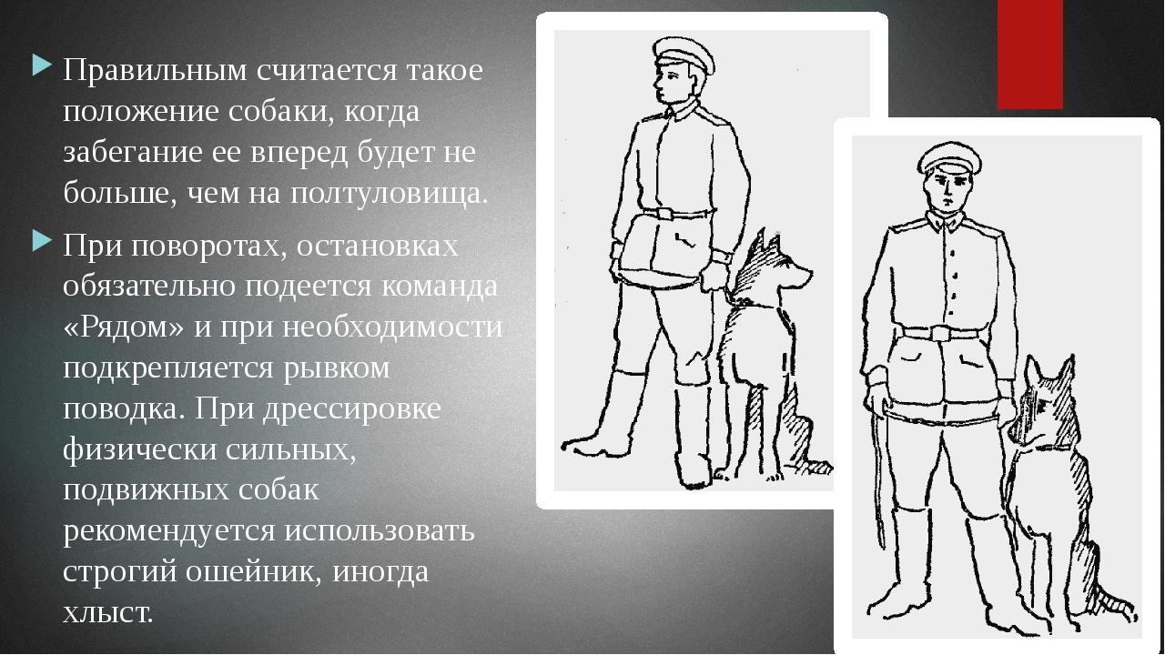 Первоначальный условный рефлекс считается выработанным, если собака по команд...