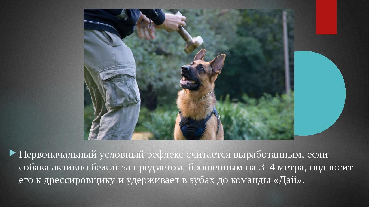 Как только собака прекратит нежелательные действия, дрессировщик поощряет ее...