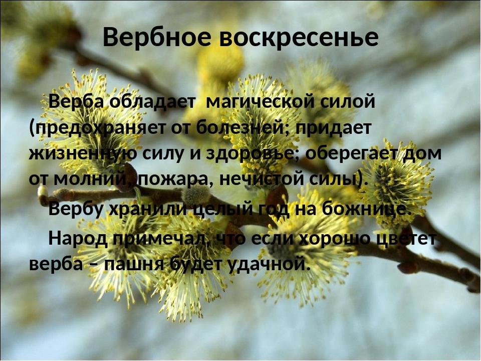 Вербное воскресенье Верба обладает магической силой (предохраняет от болезней...