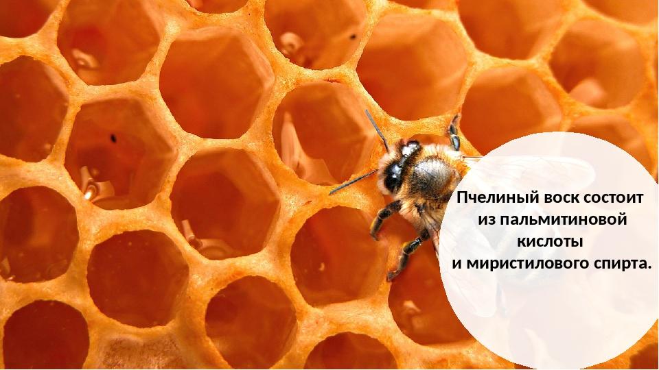 Пчелиный воск состоит из пальмитиновой кислоты и миристилового спирта.