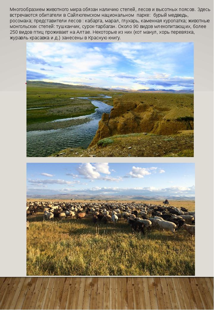 Многообразием животного мира обязан наличию степей, лесов ивысотных поясов....