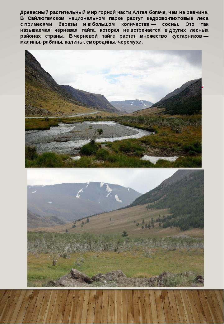 Древесный растительный мир горной части Алтая богаче, чем наравнине. В Сайлю...