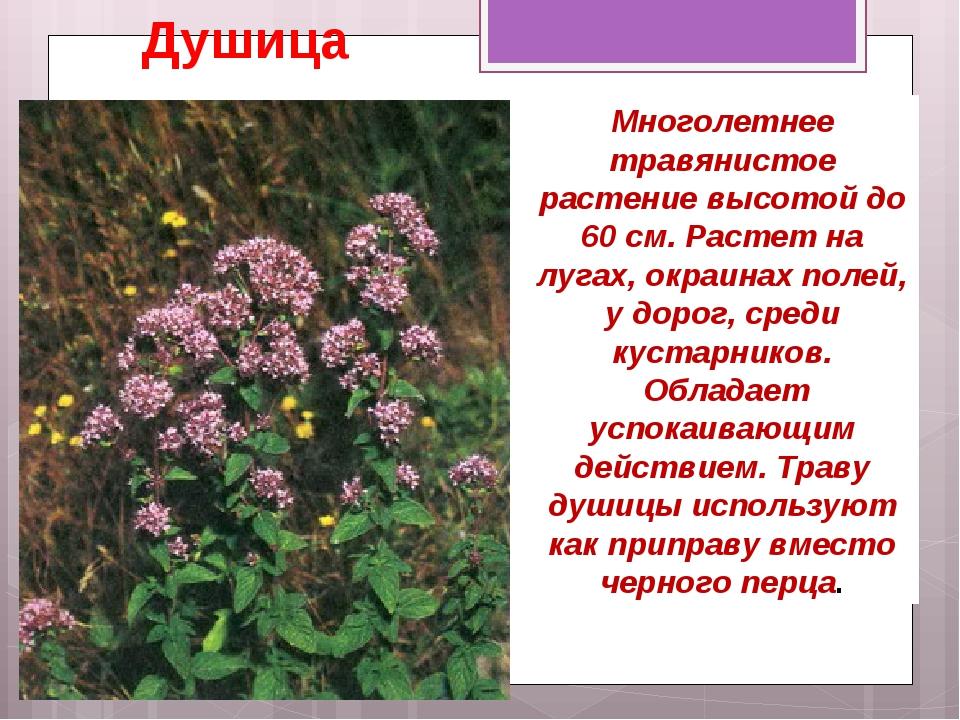фото лекарственных растений с названиями и описанием связывают его имя