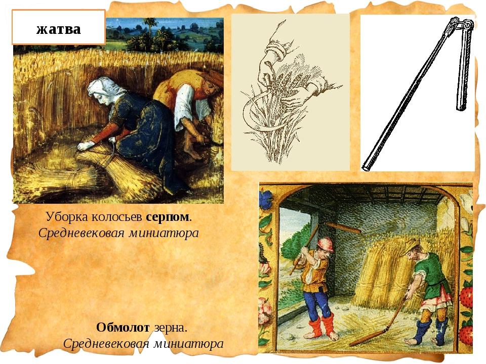 Обмолот зерна. Средневековая миниатюра Уборка колосьев серпом. Средневековая...