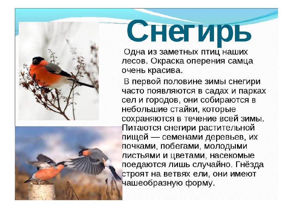 Скворцы перелетные птицы или нет кухни