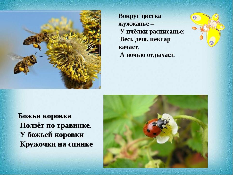 Вокруг цветка жужжанье – У пчёлки расписанье: Весь день нектар качает, А ночь...