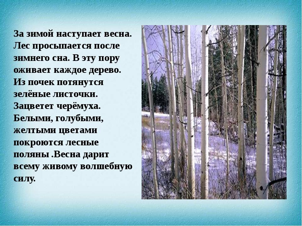 За зимой наступает весна. Лес просыпается после зимнего сна. В эту пору ожива...