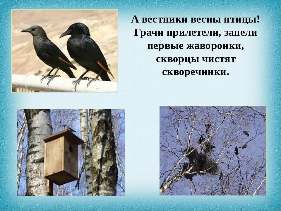 А вестники весны птицы! Грачи прилетели, запели первые жаворонки, скворцы чис...