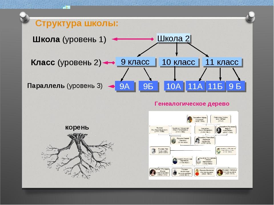 Структура школы: Генеалогическое дерево