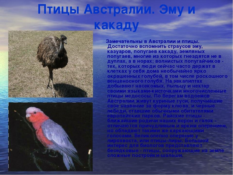 картинки с названиями птиц австралии центре