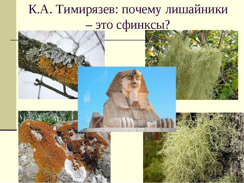 К.А. Тимирязев: почему лишайники – это сфинксы?