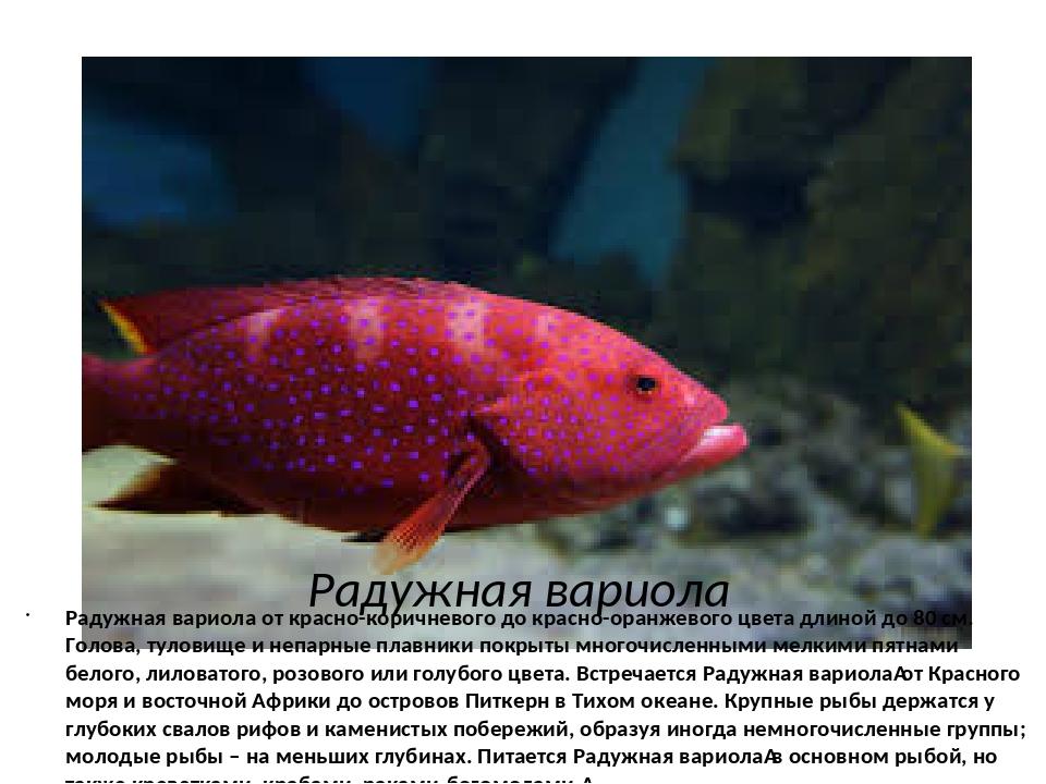Радужная вариола Радужная вариола от красно-коричневого до красно-оранжевого...
