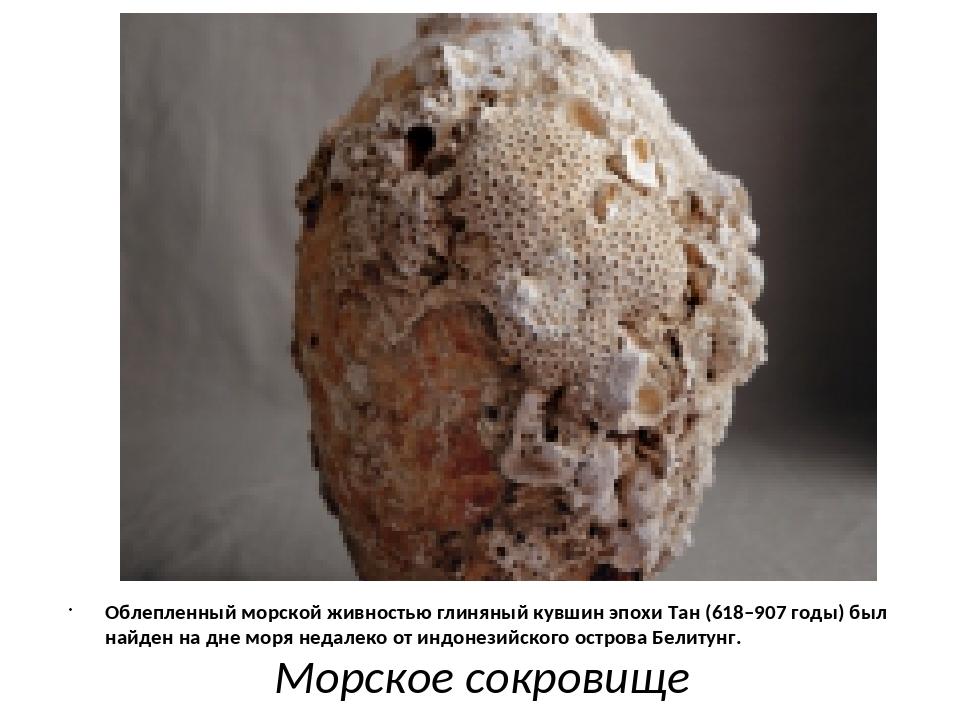 Морское сокровище Облепленный морской живностью глиняный кувшин эпохи Тан (6...