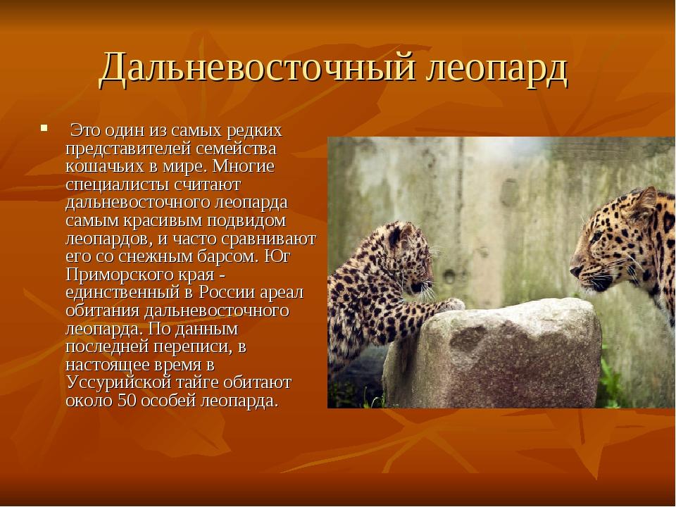 Леопард картинки с текстом, телефон красивые