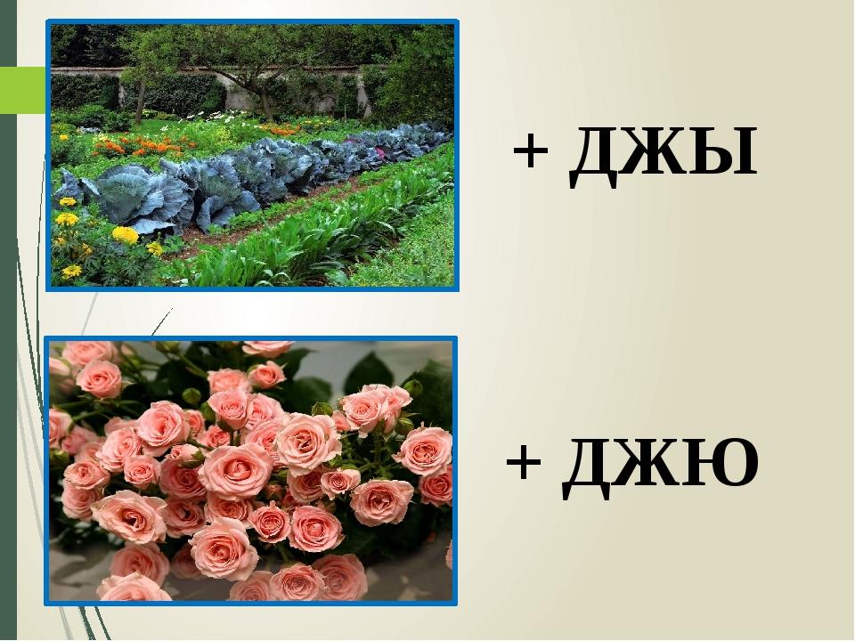+ ДЖЫ + ДЖЮ