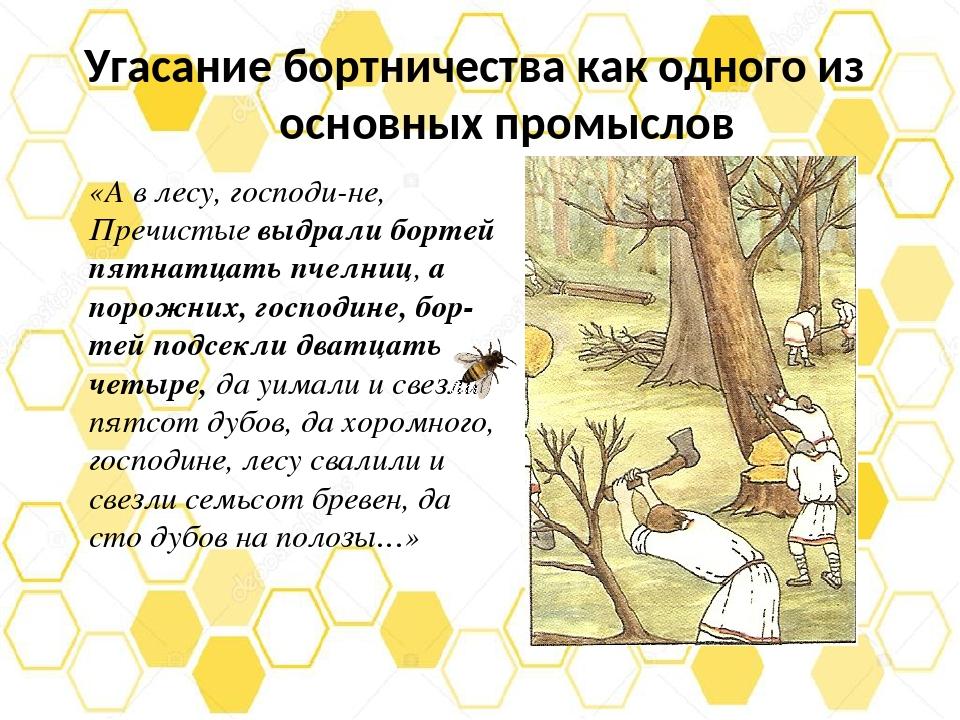 Угасание бортничества как одного из основных промыслов «А в лесу, господине,...