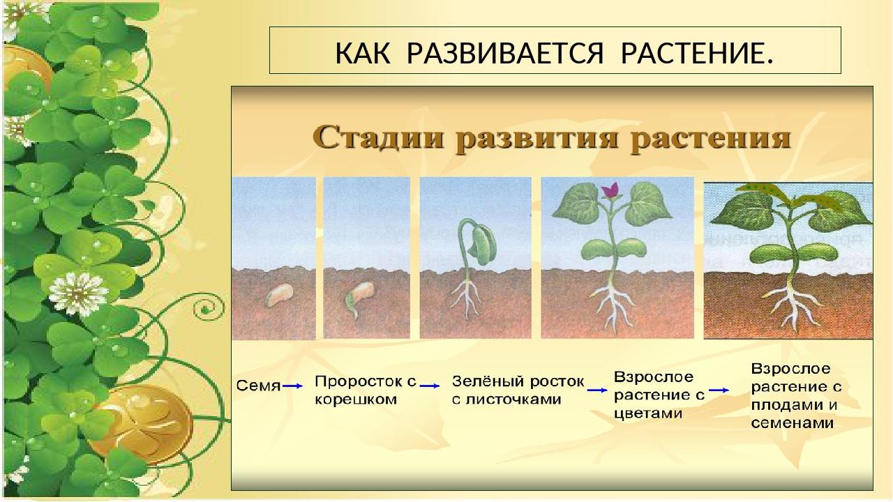 вас картинка как развивается растение из семени этот раз