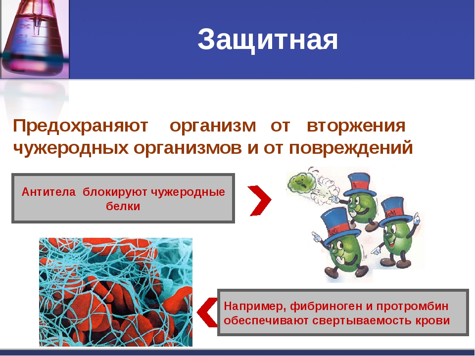 Защитная Например, фибриноген и протромбин обеспечивают свертываемость крови...