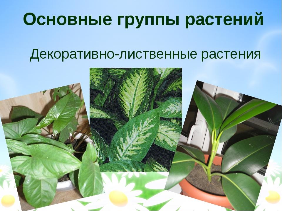 Основные группы растений Декоративно-лиственные растения