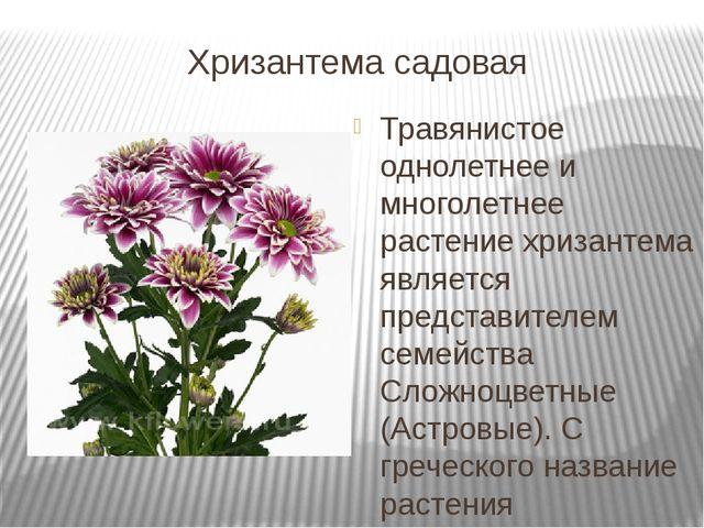 цветы картинки для детей, карточки Домана цветыAmelica | 480x640