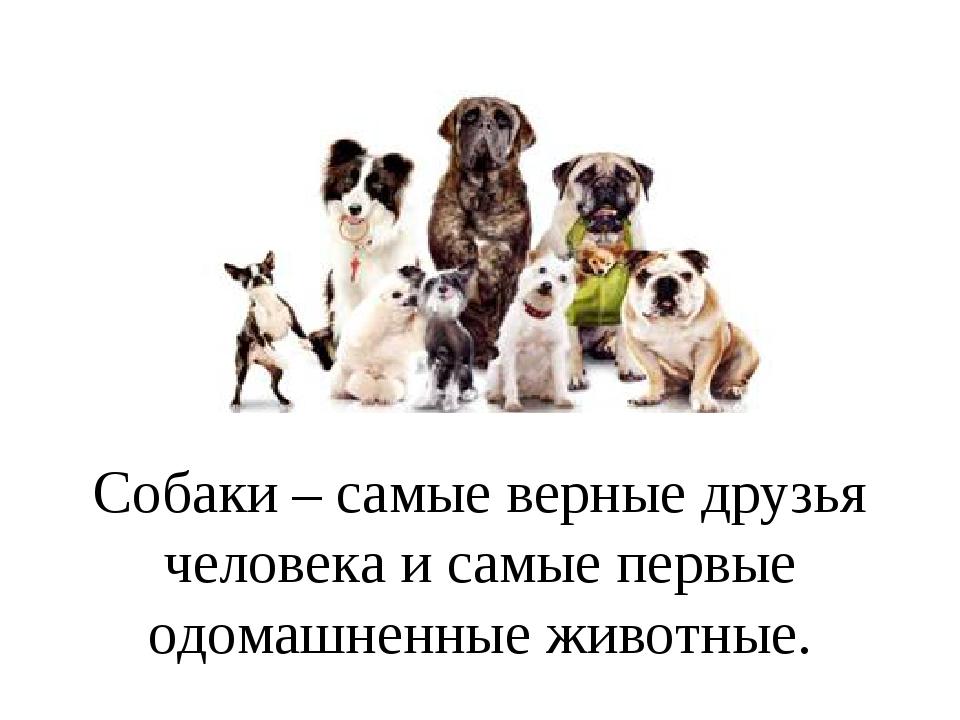 Изготовление, собака друг человека с надписью на картинке