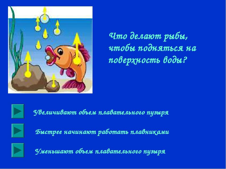 Что делают рыбы, чтобы подняться на поверхность воды? Увеличивают объем плава...