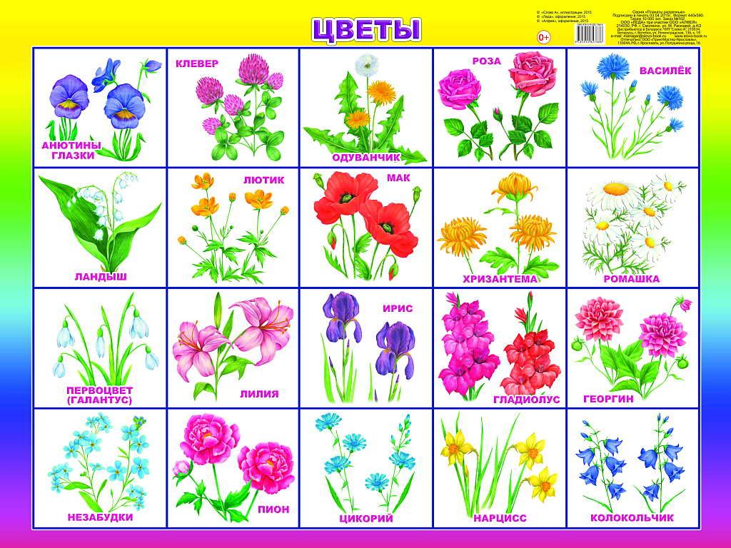Алфавит с названиями цветов в картинках