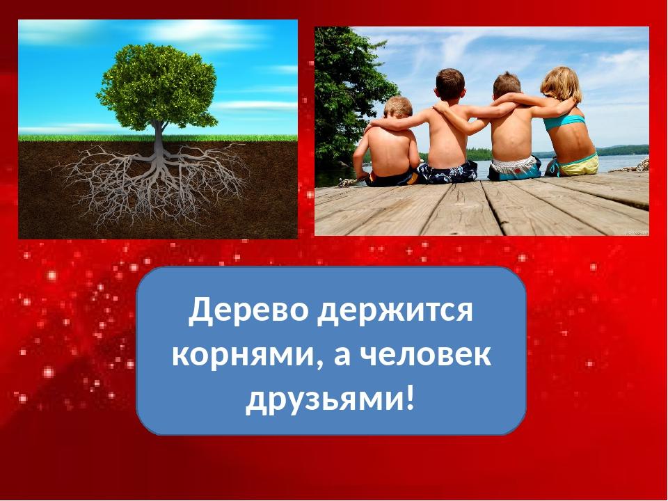Дерево держится корнями, а человек друзьями!