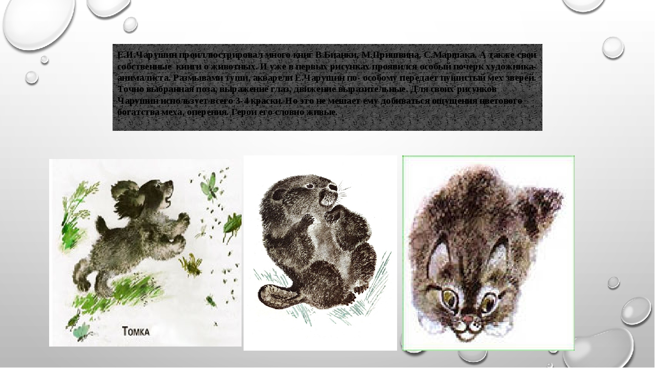 Е.И.Чарушин проиллюстрировал много книг В.Бианки, М.Пришвина, С.Маршака. А т...