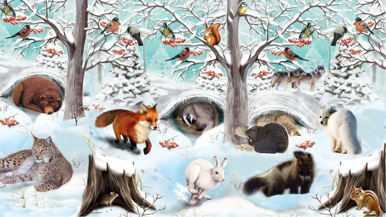 Звери зимой в лесу картинки