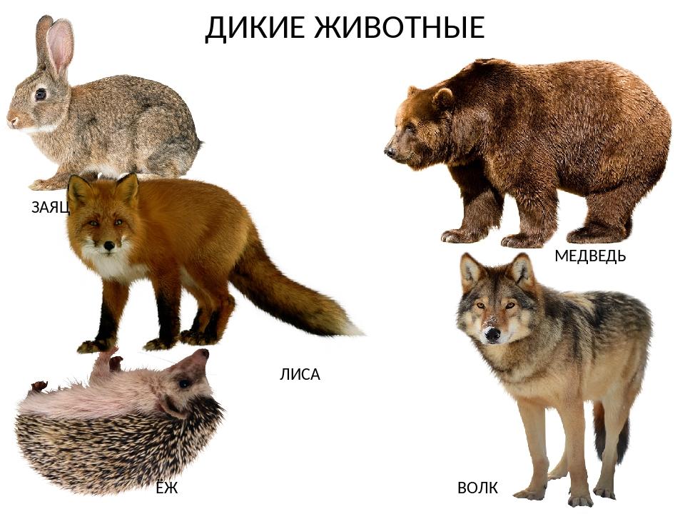 карточки с картинками заяц медведь еж лось волк лиса