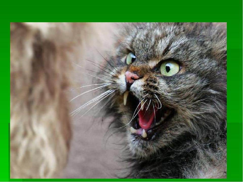 Картинки злая кошка смешные с надписями, туркменские девушки