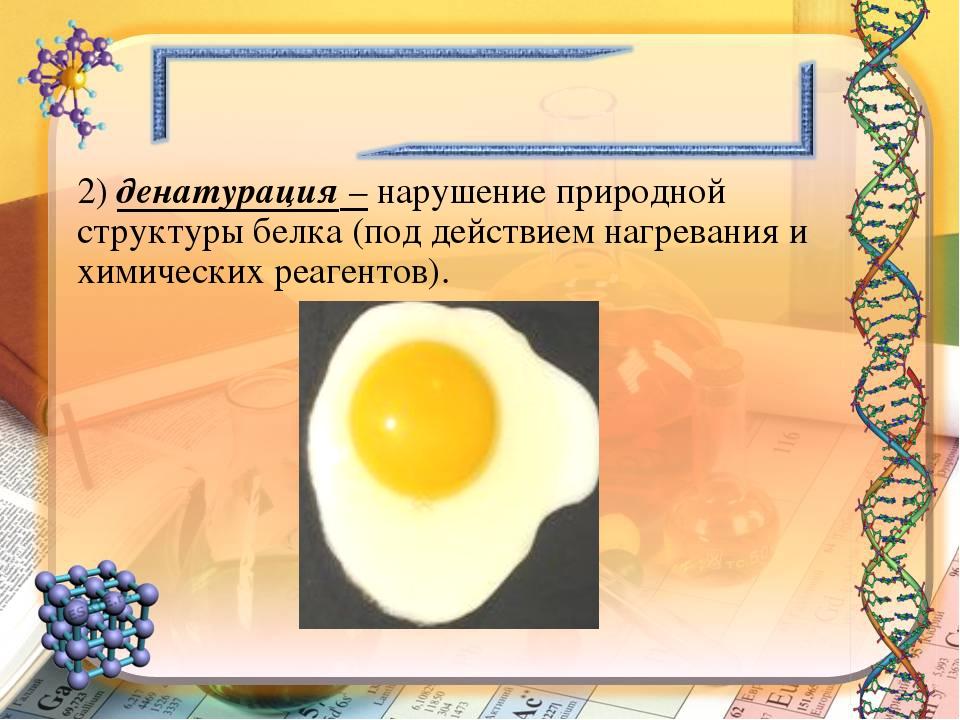 2) денатурация – нарушение природной структуры белка (под действием нагревани...
