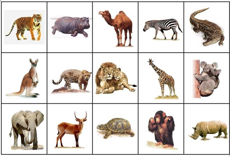 тематические картинки животные жарких стран себя спецом