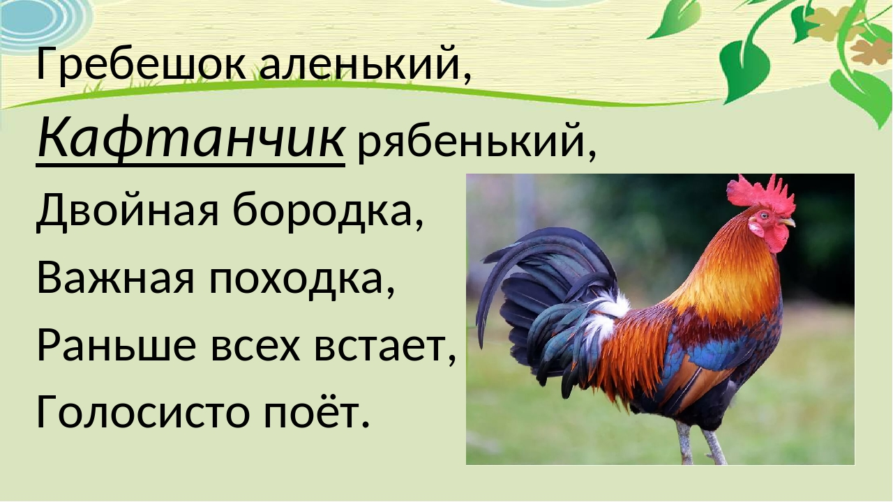 Гребешок аленький, Кафтанчик рябенький, Двойная бородка, Важная походка, Рань...
