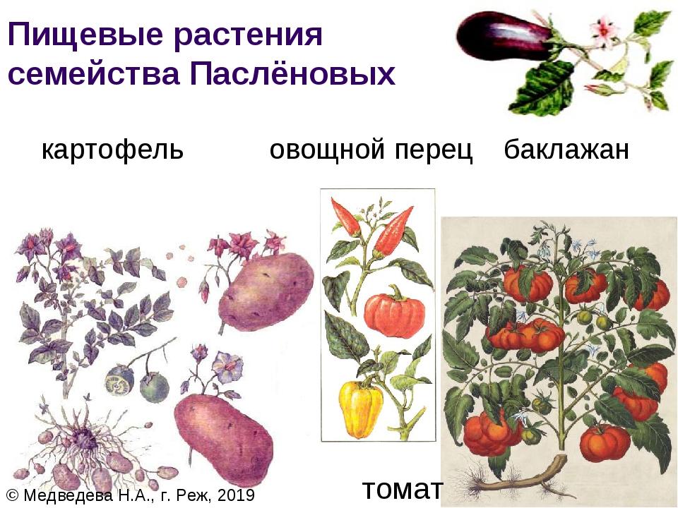 этом уроке картинки культурных растений пасленовых мною рядом
