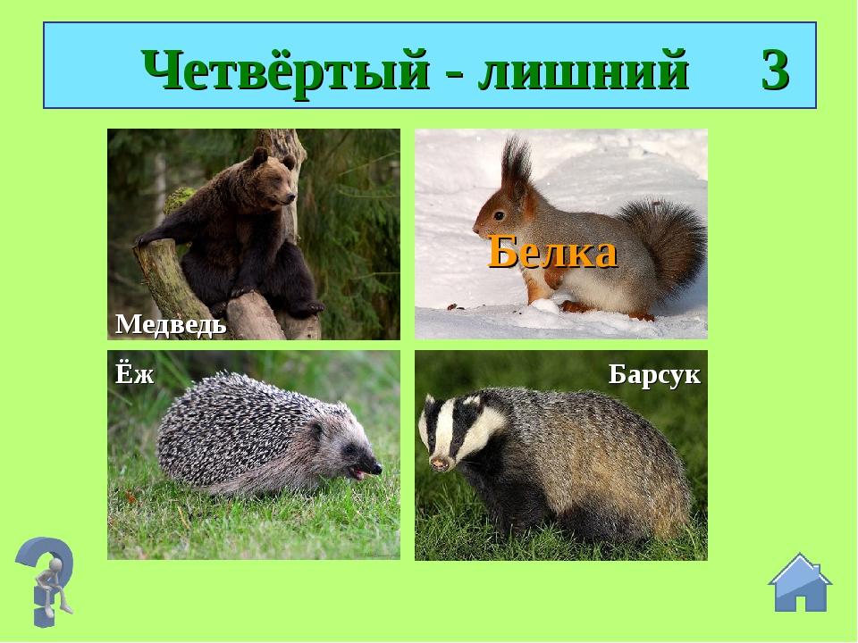 Четвёртый - лишний 3 Медведь Ёж Барсук Белка