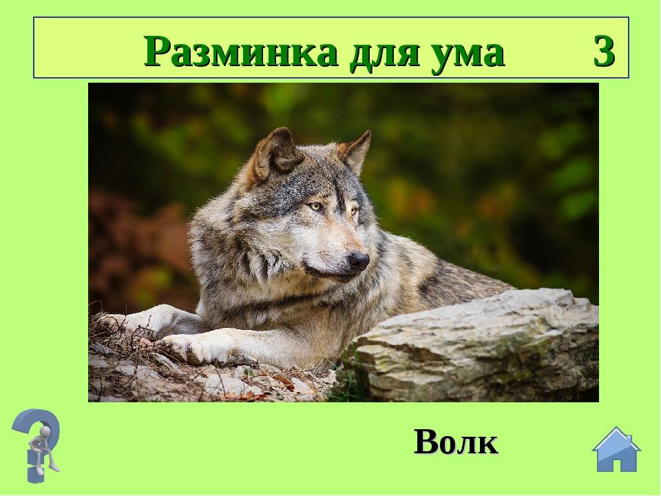 Разминка для ума 3 Подсказка: В О ЛК Волк