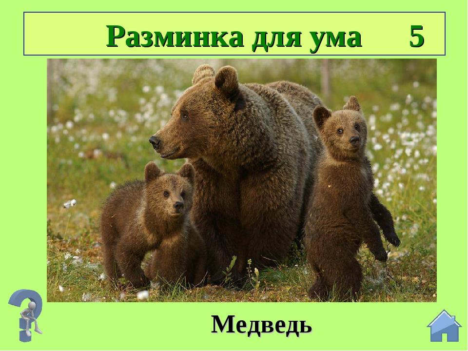 Разминка для ума 5 Подсказка: ДОМ ВЕДРО СЕМЬ Медведь