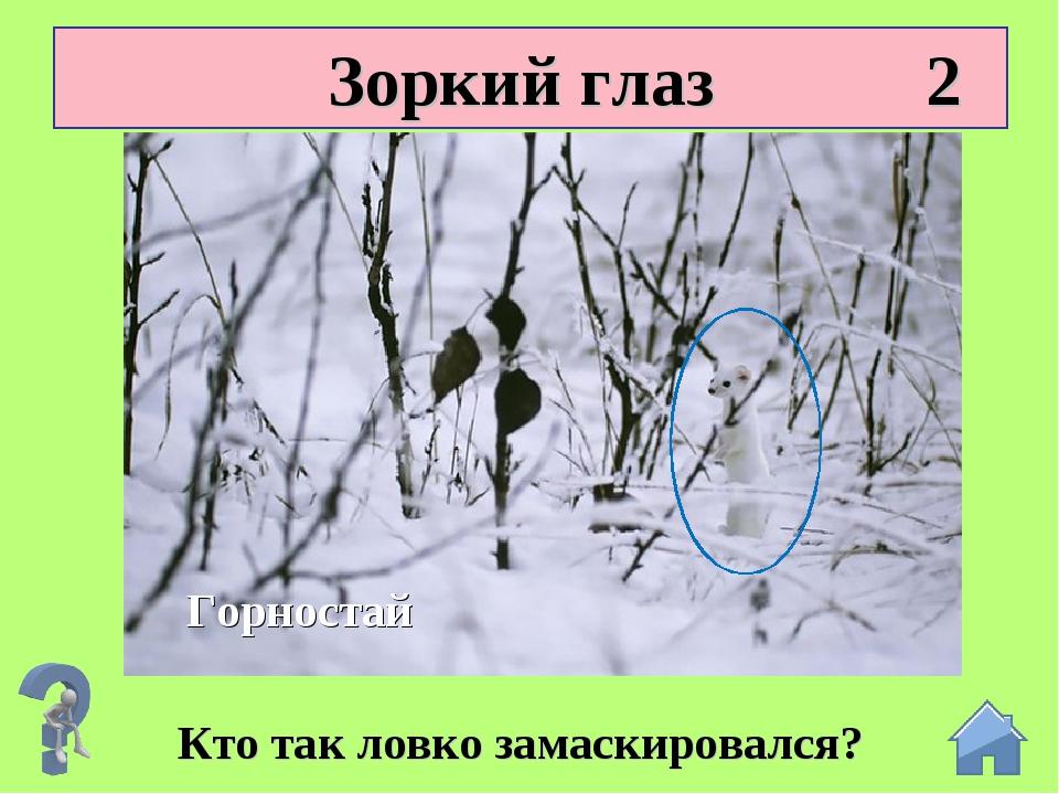 Зоркий глаз 2 Кто так ловко замаскировался? Горностай
