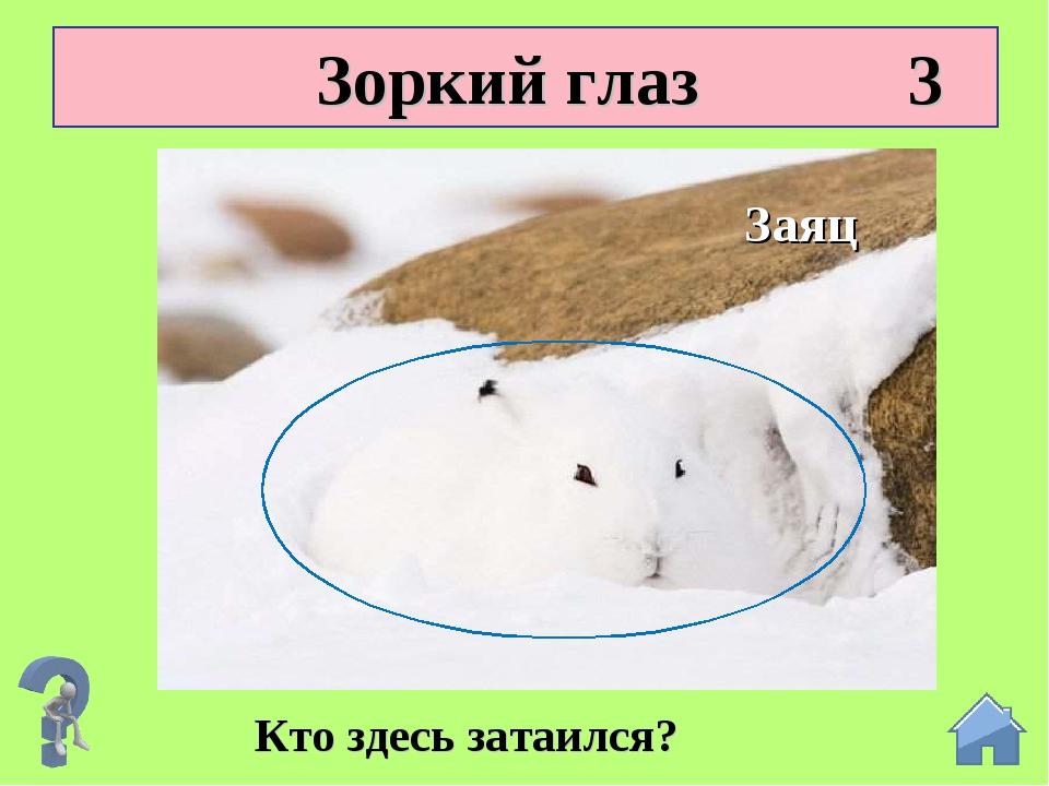 Зоркий глаз 3 Кто здесь затаился? Заяц