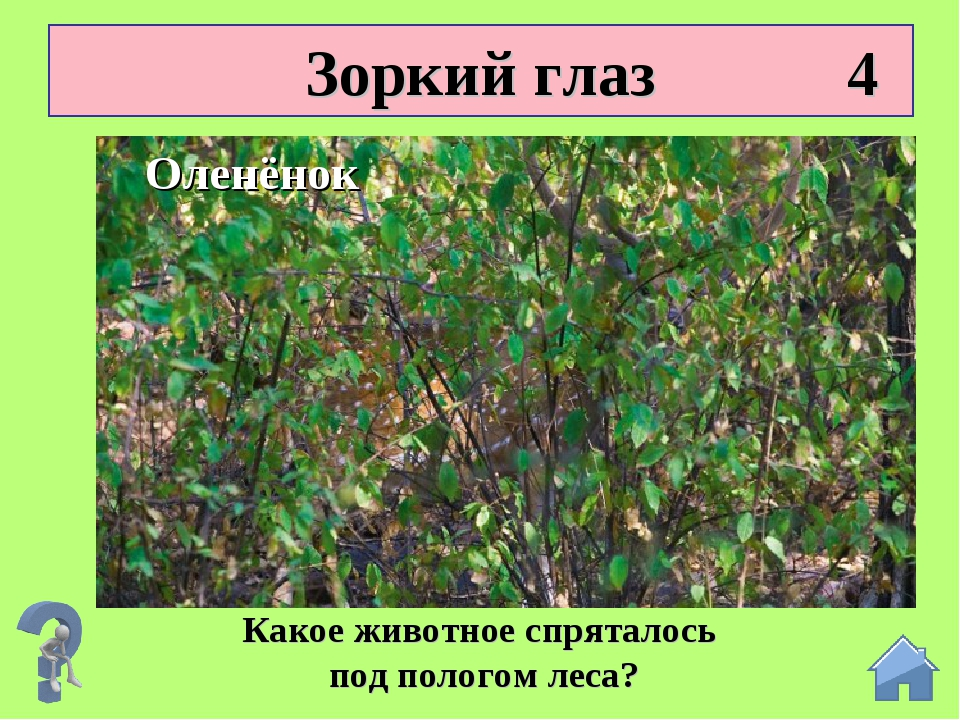 Зоркий глаз 4 Какое животное спряталось под пологом леса? Оленёнок